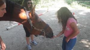 Ringraziando il cavallo