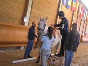 Salire a cavallo